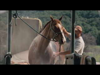 Equestrian sexual response (2010)