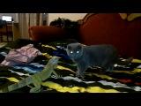 Неугомонный коту