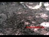 Мульчирование почвы в теплице