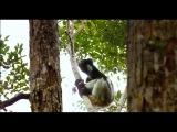 Остров лемуров Мадагаскар