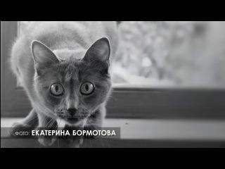 Публичное выражение: без кота жизнь не та