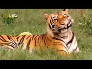 Необычные истории о дружбе животных.