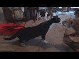 Забавные кошачьи испуги :)