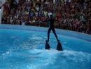 2 дельфина и между ними - человек
