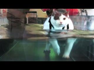Cat Staying Alive - Остаться в живых