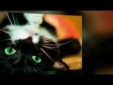 кошки - Зарубежный медляк/Супер музыка....Под эту песни все целуются)))аааа класс!!. Слайдшоу vertaSlide