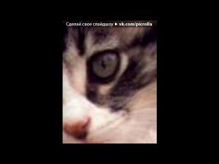 «Фото-Статусы • fotiko.ru» под музыку Жанна Агузарова - Черный кот. Picrolla