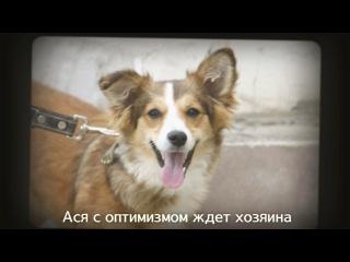 Собаки передержки лиги верный друг - май-июнь, 2014 г