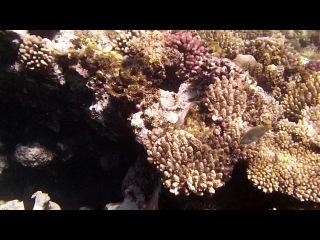 Море и рыбы - подводный мир Красного моря, Египет, Шарм-Эль-Шейх