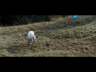 Сергей Безруков  в фильме