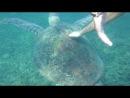Покатай меня ,большая черепаха )))