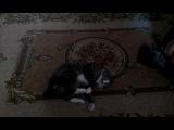 Что будет,если коту дать валерьянку)