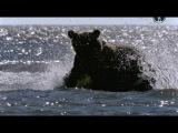 BBC. Жизнь на планете Земля (2010) - 07. Хищники и их жертвы