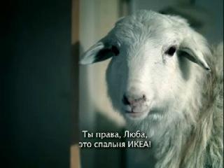 Вівці помилилися зі спальнею IKEA!