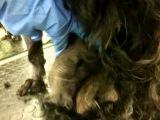 Очень,очень запущенная собака,....очень жалко таких(((( 2012 г.