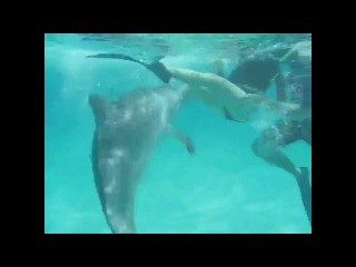 Секс дельфин и девушка