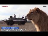 хроники нарнии))))) e-News_2014.03.14