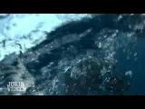 Нападение гигантской меч-рыбы на дайвера