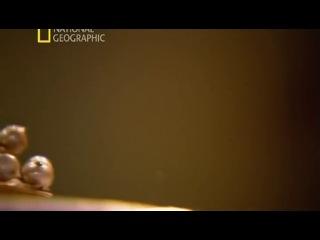 National Geographic: HD ru Секретные материалы древности. Святой грааль. (2011) / National Geographic: HD ru Confidential materials of an antiquity. Sacred Graal. (2011)