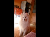 Как собака реагирует на пищалку:)