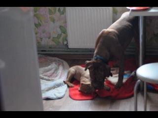 Фиона наказывает щенка за драку.