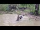 Четкий кенгуру щемит терпилу-пса