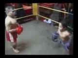 бокс лилипутов