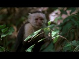 2007 | BBC: Дикие Карибы | Wild Caribbean | Таинственные берега - 04|04