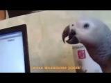Говорящий хомяк достал даже попугая