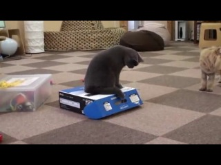 Приколы с животными (Коробка - ловушка для кота) - Это и много других интер[[164103167]]