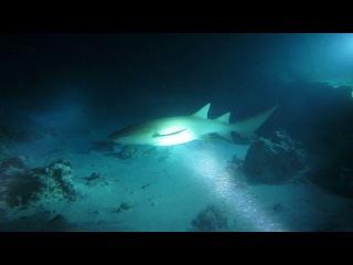 Ночной дрифт с акулами-няньками.