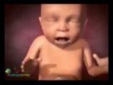 как развивается ребенок в утробе матери