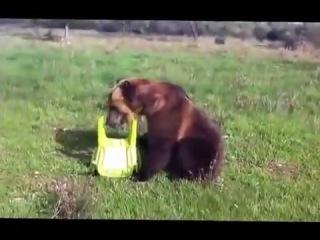 Димка, ручной медведь (не путать с... !)