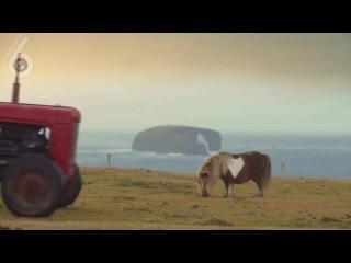 Пони Джексон (6 sec)