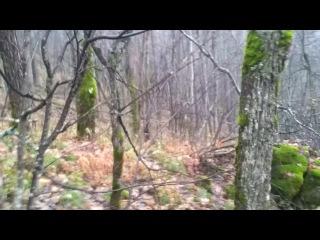 Заяц-беляк в осеннем лесу