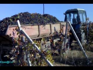 2011 Алькадар (Крым).виноградники,винзавод.