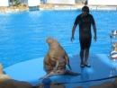 дельфинарий Египет 2014