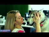 День зоотерапии в Mail.Ru Group