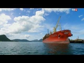 BBC Купание с китами-убийцами
