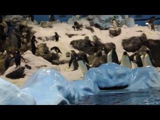 Тенерифе, Лоро парк. Пингвины.