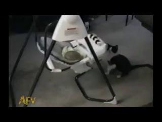Веселый няня-кот