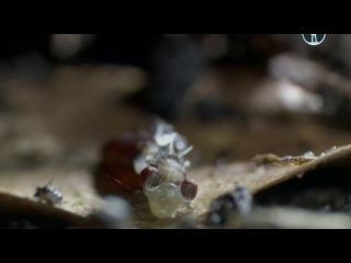 BBC. Жизнь на планете Земля (2010) - 01. Борьба за выживание