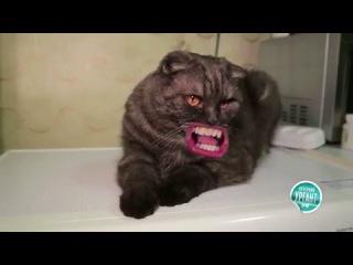 Кот песню поёт