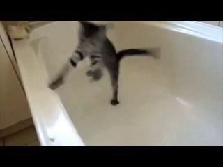Эти_смешные_кошки__приколы_с_животными_360p