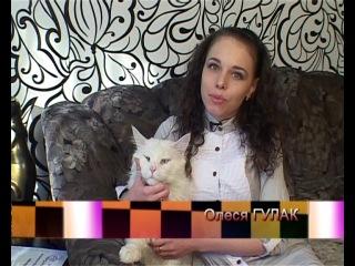 Мейн-кун - самая большая домашняя кошка в МИРЕ!!!