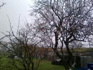 Новоотрадное. Крым. Снег идет!!!