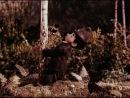 7. Олівець та ляпка - веселі мисливці. (1954р.)