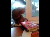 Линка и мяуканье котов