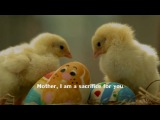 Красивый нашид - Сердце матери - Мухаммад аль-Умари.mp4