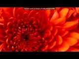 Скрытый альбом с картинками для конструктора МиниТестов под музыку Neon Trees - Animal ( саундтрек из Симс 3 Животные) . Picrolla